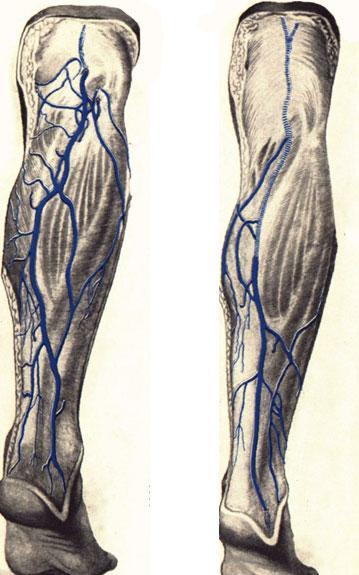Размеры воротной вены печени в норме