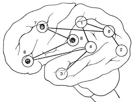 схема связей речевых центров