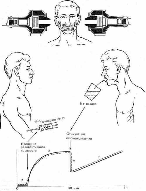Радионуклидное исследование функции слюнных желез в норме