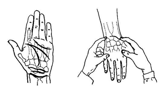 Ощупывание - Область луче-запястного сустава - Ортопедическая...