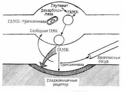 Схема синапса с ГАМК в