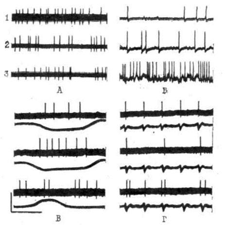 Типы нейрональной активности каудального брыжеечного симпатического ганглия