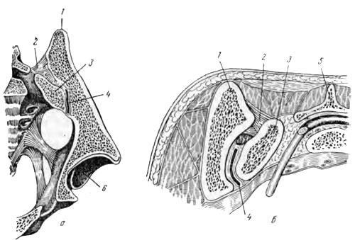 анатомия подвздошная кость: