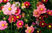 Дарите цветы на здоровье!