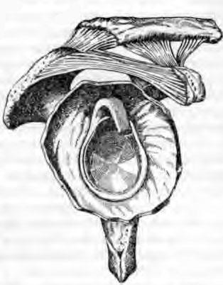 Суставная поверхность лопаточной кости вместе с капсулой плечевого сустава