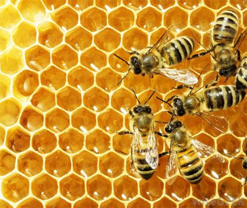 Подмор пчёл: особенности и польза