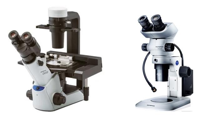 Оптический микроскоп: главные особенности